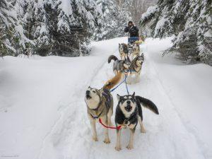 w4-dog-sledding
